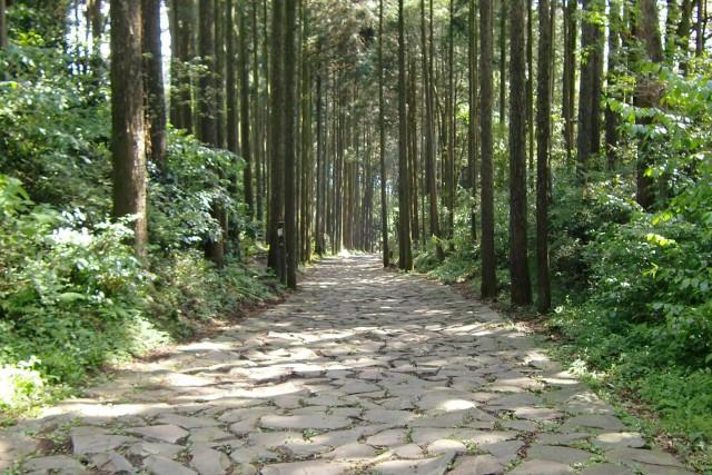 yamanakajo-toukaido