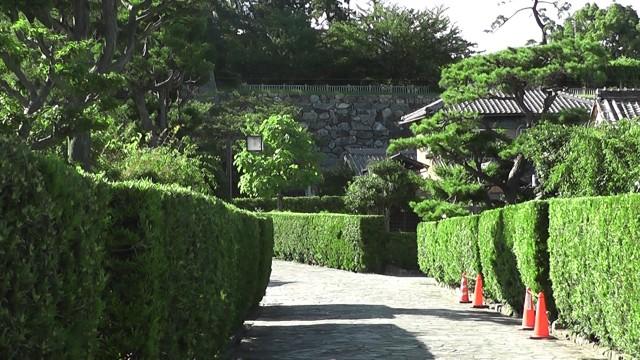 2010-07-18_160825matuzaka