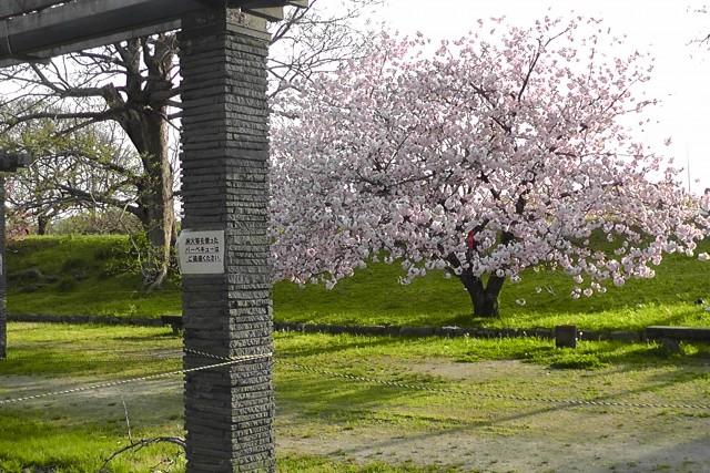 福岡城写真4